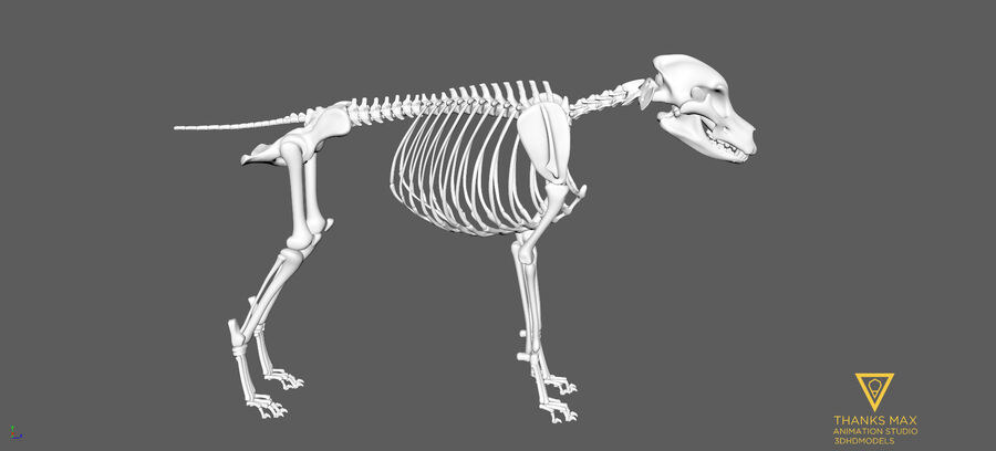 Chien Anatomie Canine royalty-free 3d model - Preview no. 65