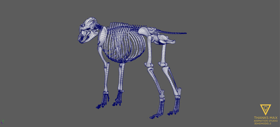 Chien Anatomie Canine royalty-free 3d model - Preview no. 48