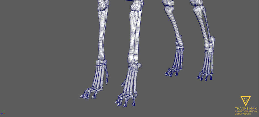 Chien Anatomie Canine royalty-free 3d model - Preview no. 57