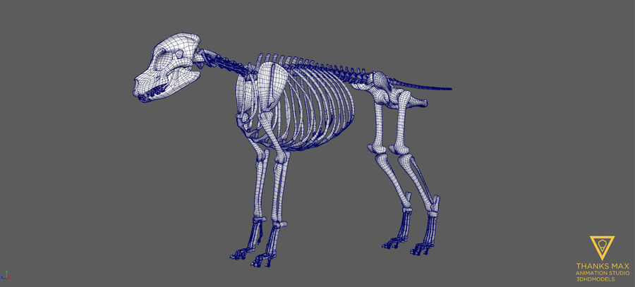 Chien Anatomie Canine royalty-free 3d model - Preview no. 47