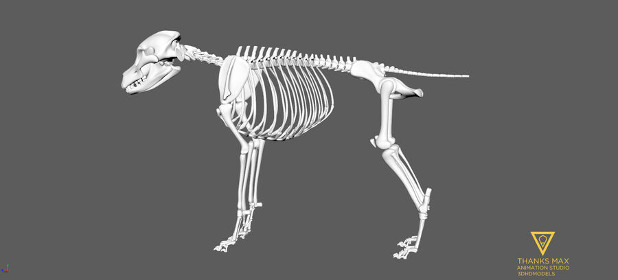 Chien Anatomie Canine royalty-free 3d model - Preview no. 91