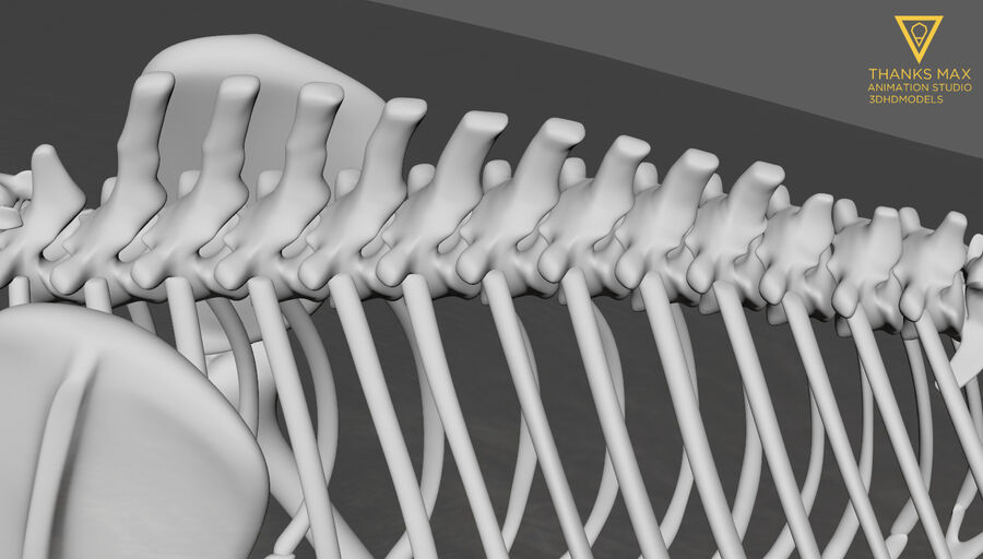 Chien Anatomie Canine royalty-free 3d model - Preview no. 21