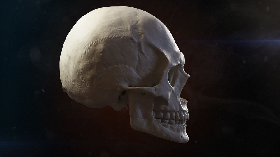 Skull advanced royalty-free 3d model - Preview no. 3