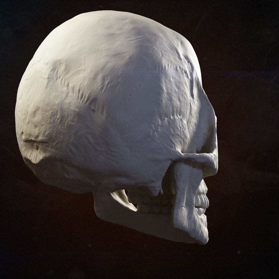 Skull advanced royalty-free 3d model - Preview no. 4