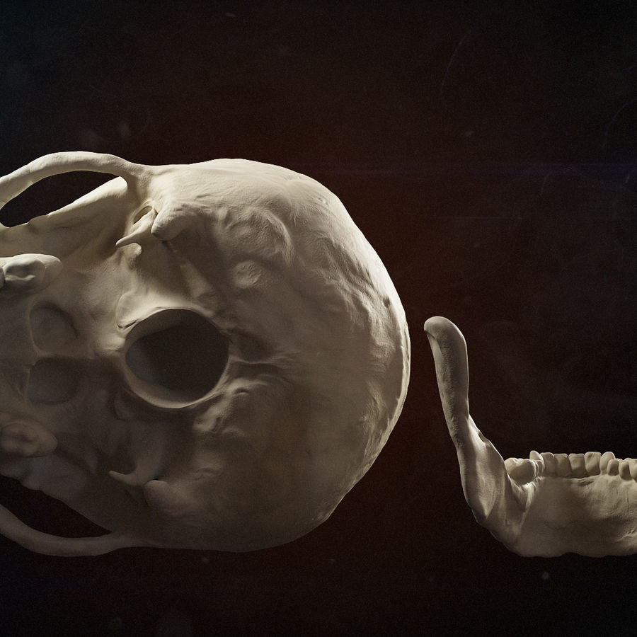 Skull advanced royalty-free 3d model - Preview no. 9