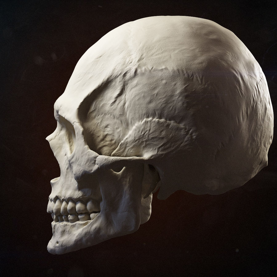 Skull advanced royalty-free 3d model - Preview no. 7