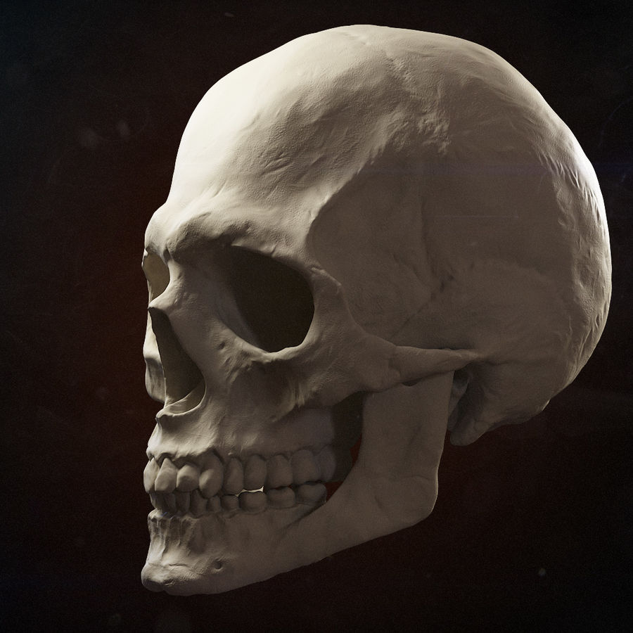 Skull advanced royalty-free 3d model - Preview no. 8