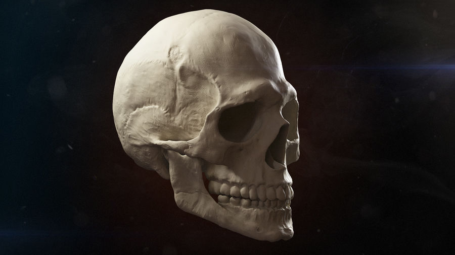 Skull advanced royalty-free 3d model - Preview no. 2