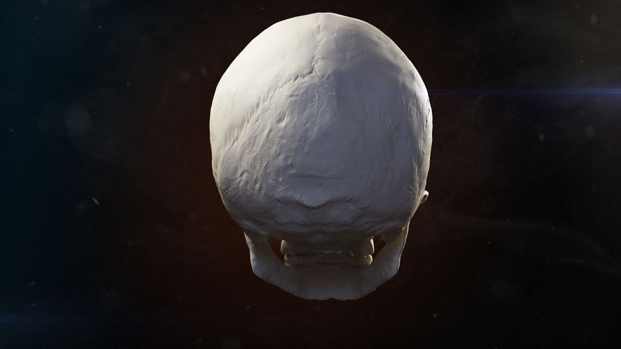 Skull advanced royalty-free 3d model - Preview no. 5