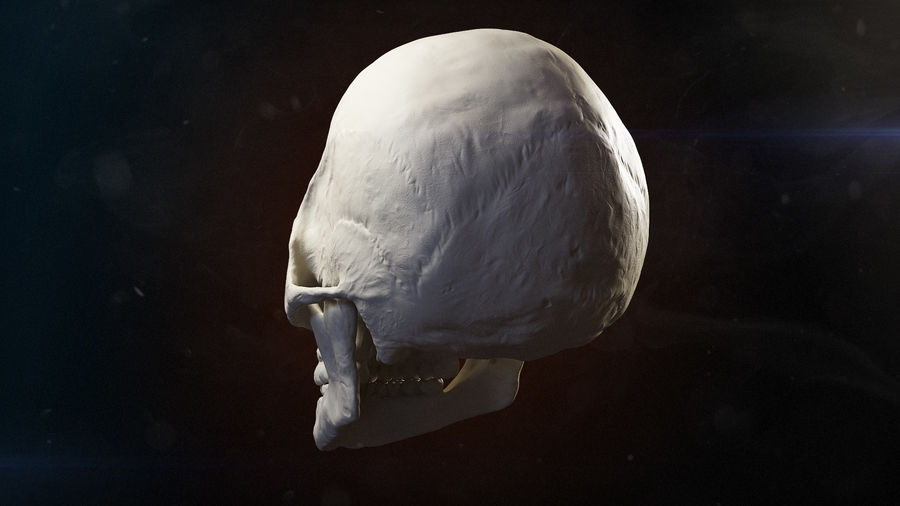 Skull advanced royalty-free 3d model - Preview no. 6