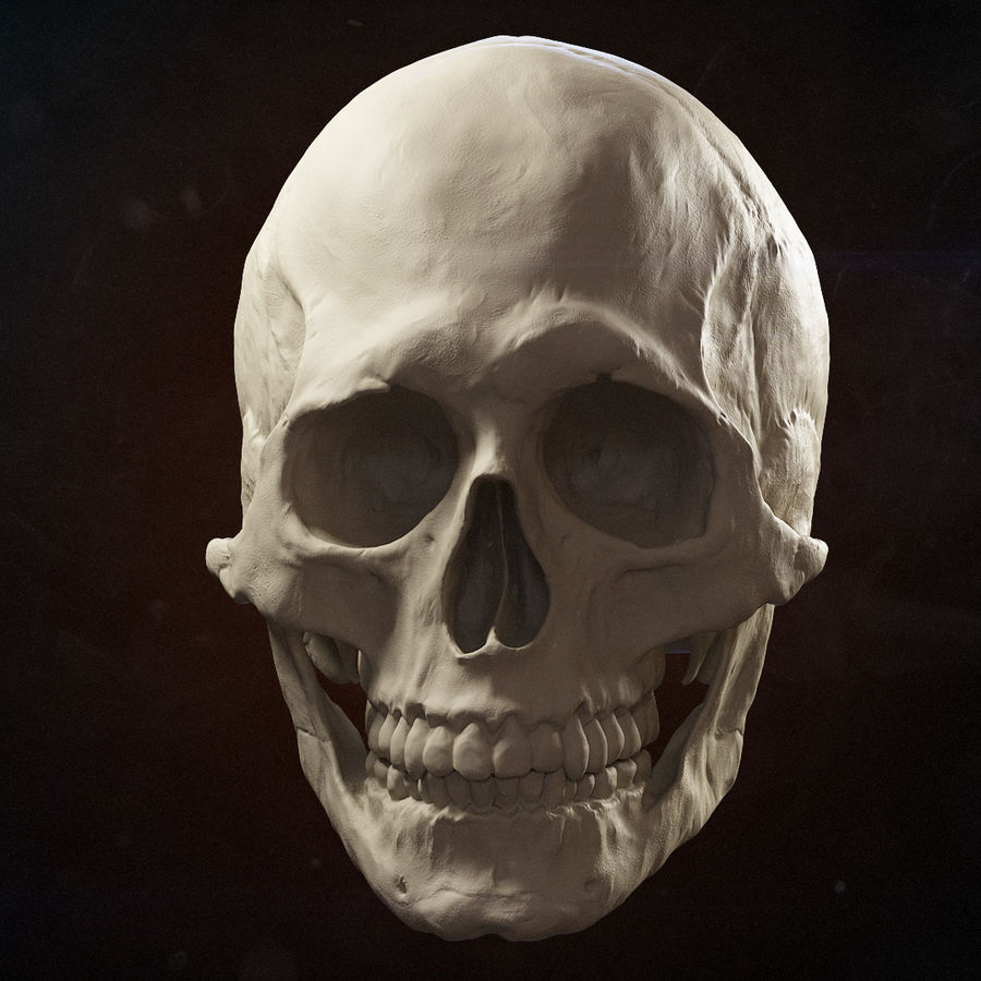 Skull advanced royalty-free 3d model - Preview no. 1