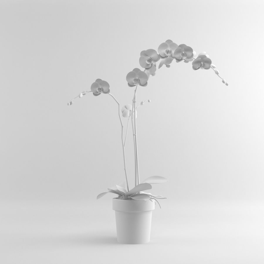 Orchid Moth white royalty-free 3d model - Preview no. 6
