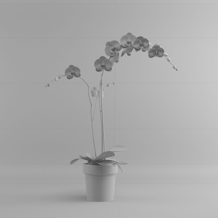 Orchid Moth white royalty-free 3d model - Preview no. 7