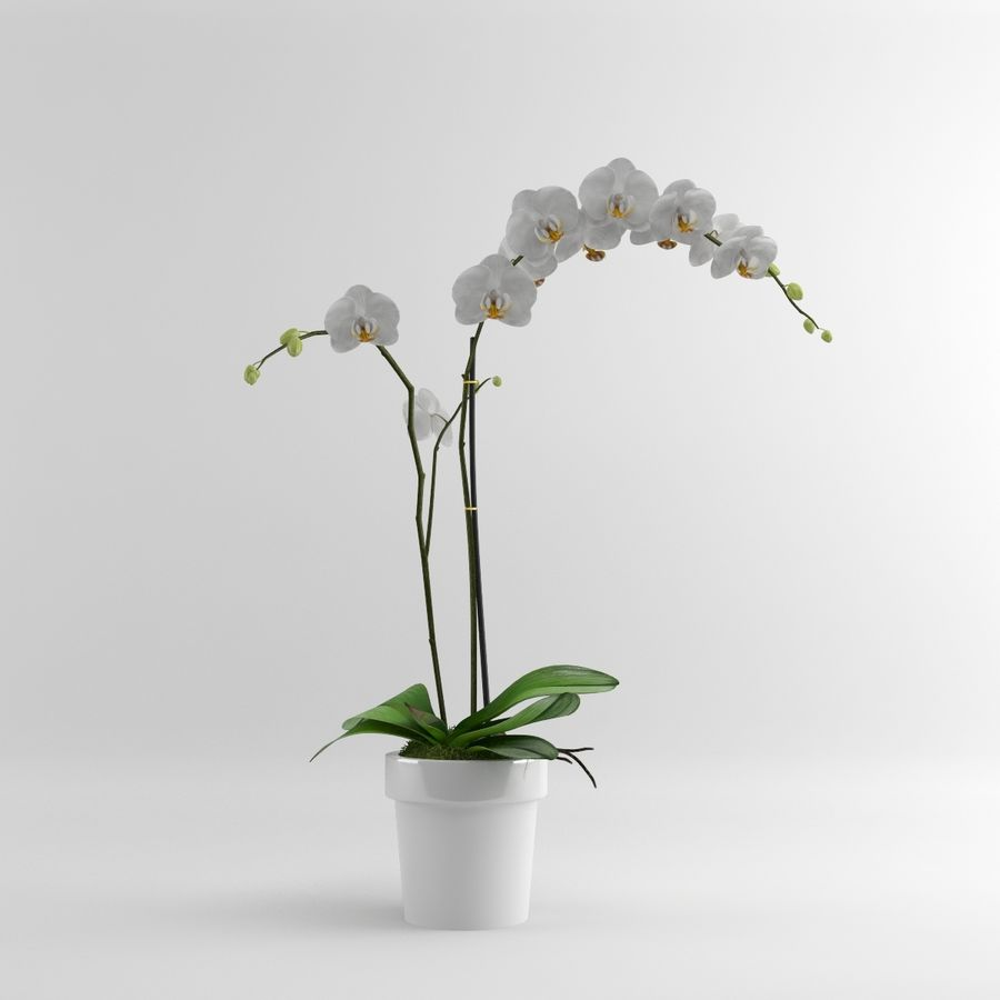 Orchid Moth white royalty-free 3d model - Preview no. 1