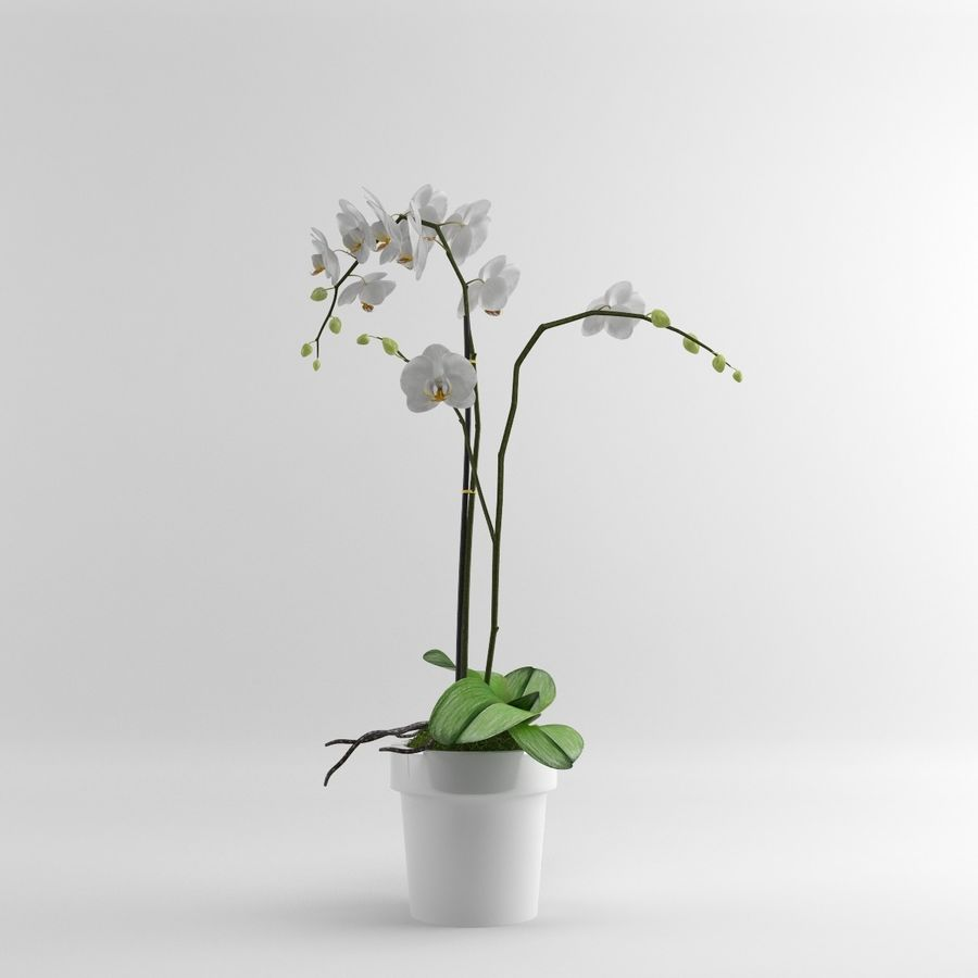 Orchid Moth white royalty-free 3d model - Preview no. 4