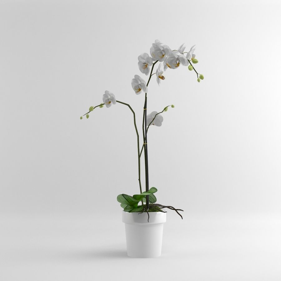Orchid Moth white royalty-free 3d model - Preview no. 2