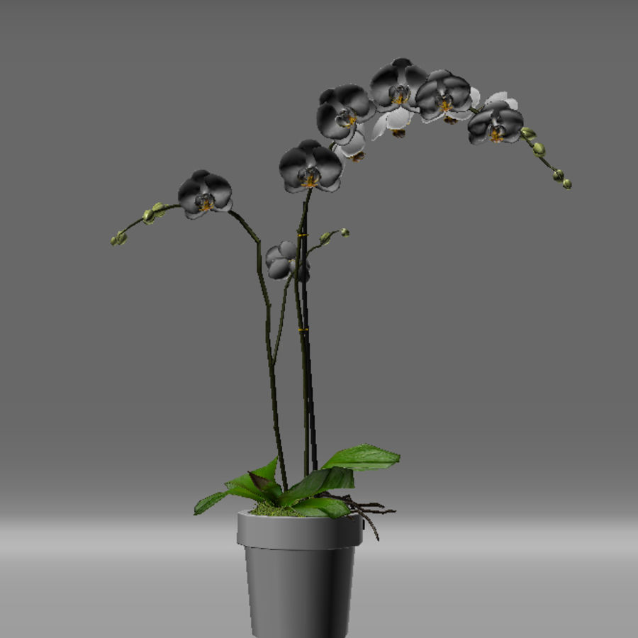 Orchid Moth white royalty-free 3d model - Preview no. 8