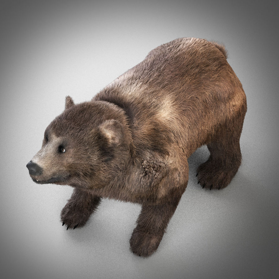 Oso grizzly royalty-free modelo 3d - Preview no. 5