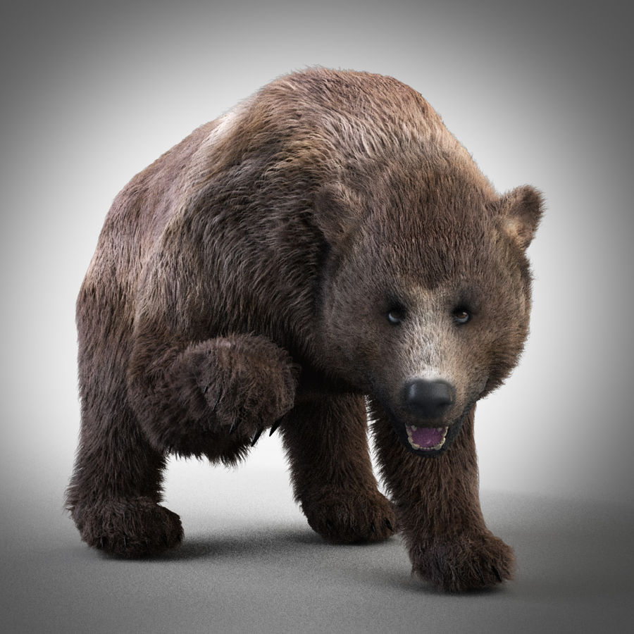 Oso grizzly royalty-free modelo 3d - Preview no. 2