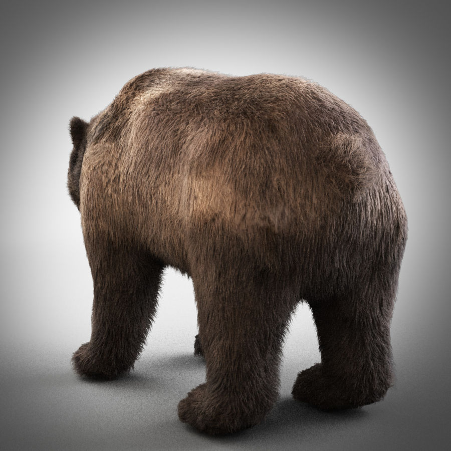 Grizzly royalty-free 3d model - Preview no. 3