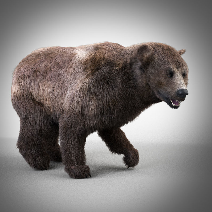 Grizzly royalty-free 3d model - Preview no. 1