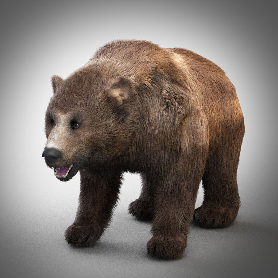 Grizzly royalty-free 3d model - Preview no. 4