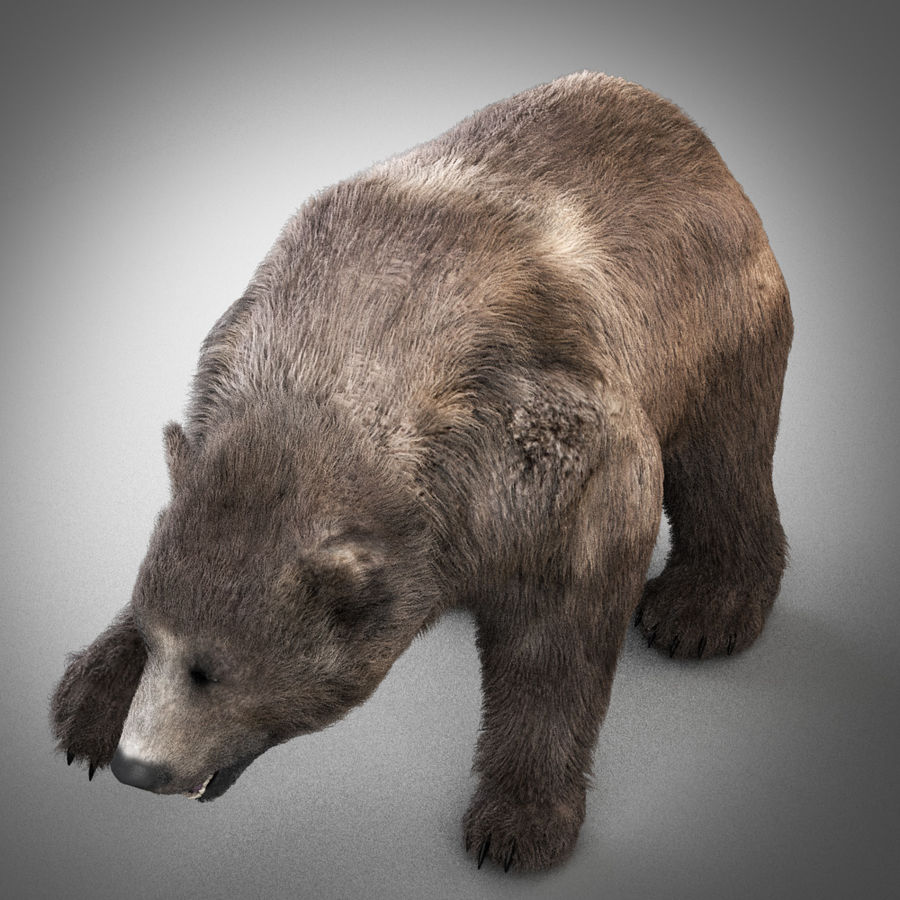 Oso grizzly royalty-free modelo 3d - Preview no. 6