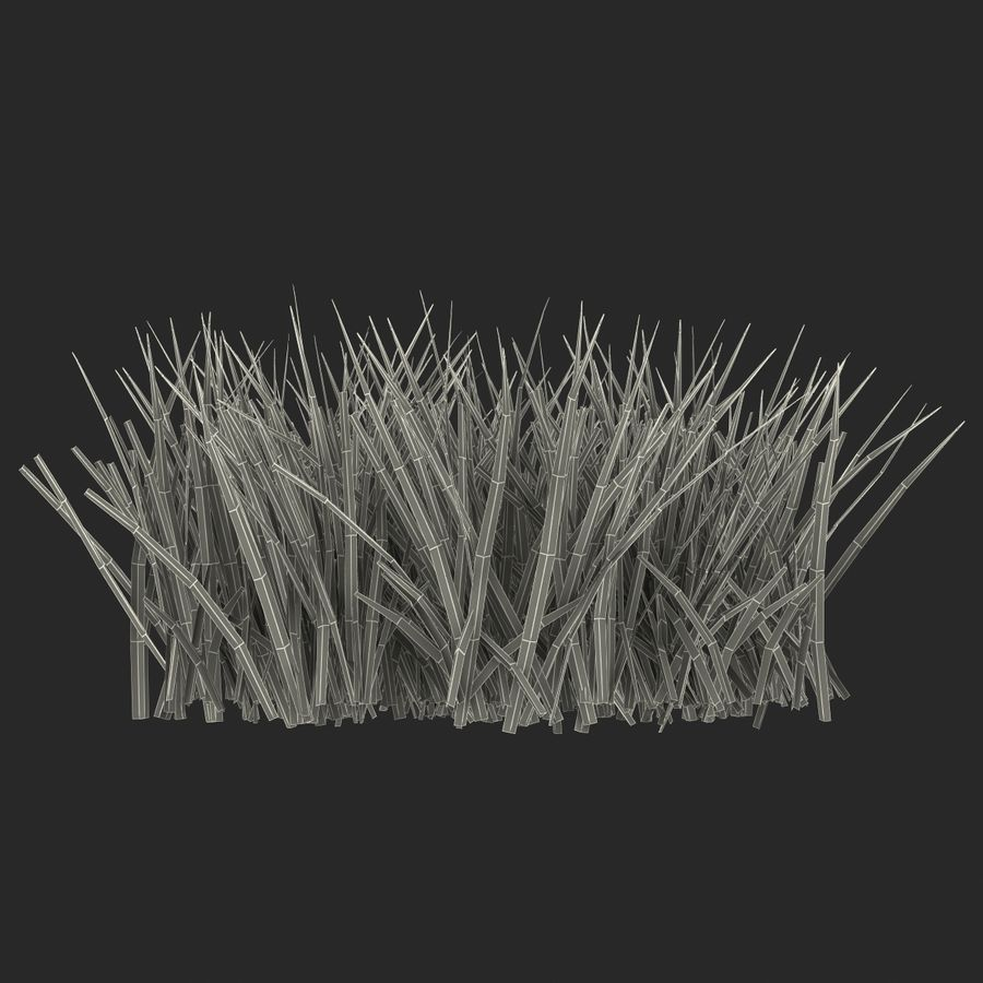 Grass 2 royalty-free 3d model - Preview no. 14
