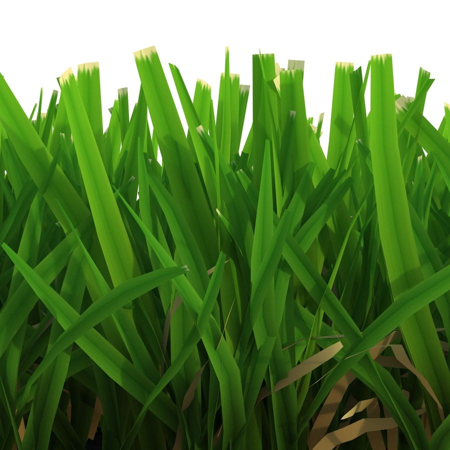 Grass 5 royalty-free 3d model - Preview no. 8
