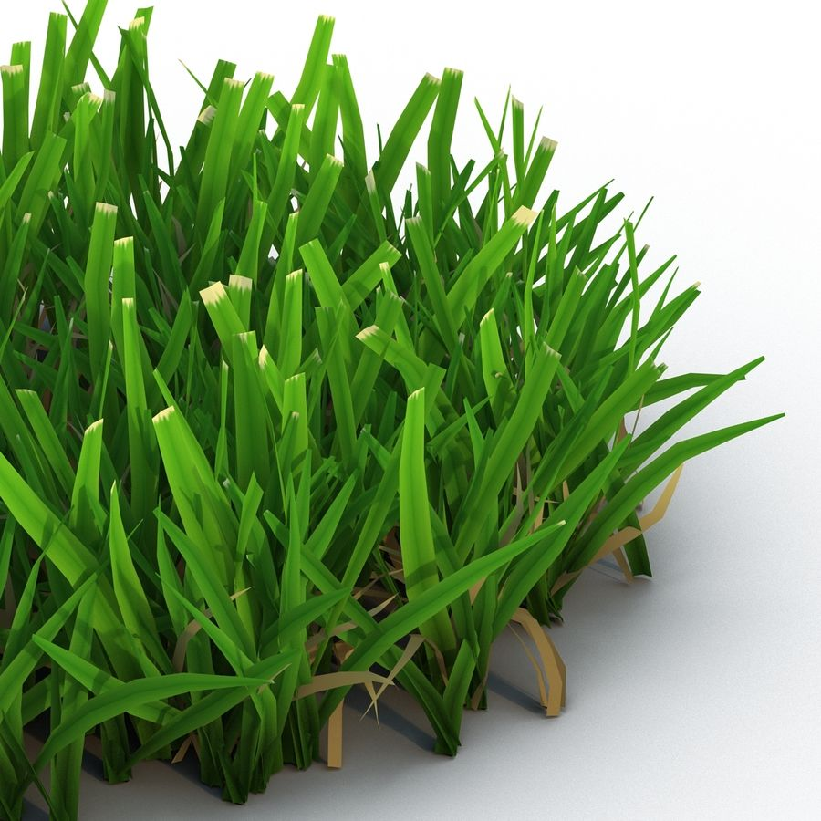 Grass 5 royalty-free 3d model - Preview no. 7