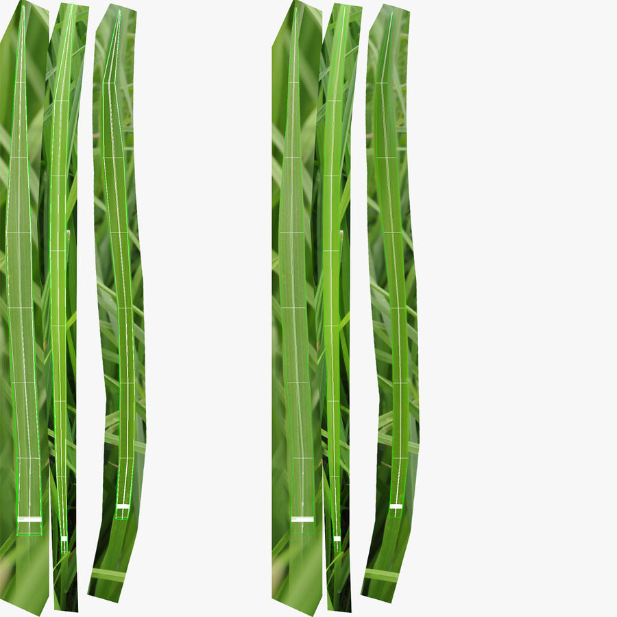 Grass royalty-free 3d model - Preview no. 14