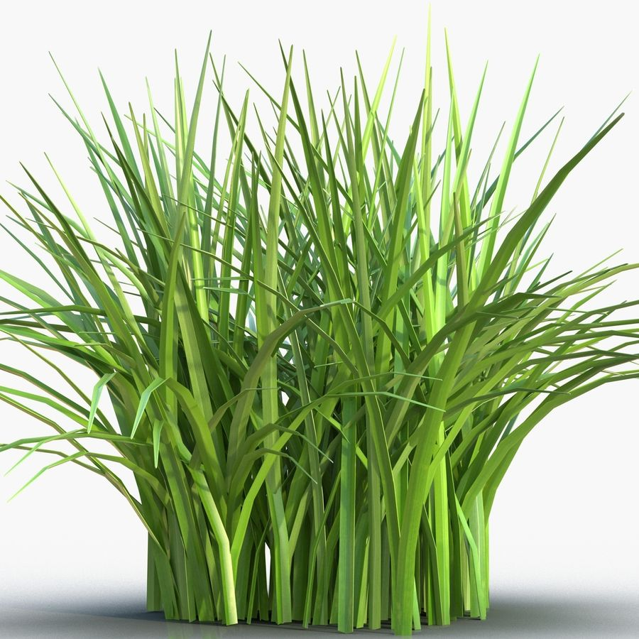 Grass royalty-free 3d model - Preview no. 8