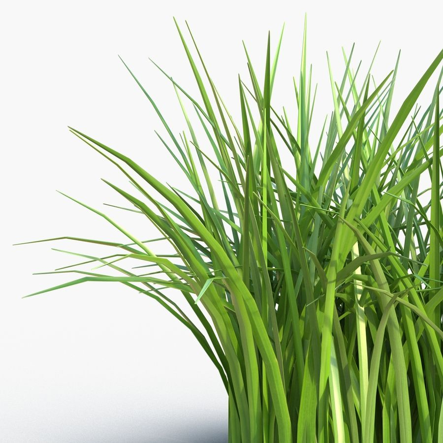 Grass royalty-free 3d model - Preview no. 10