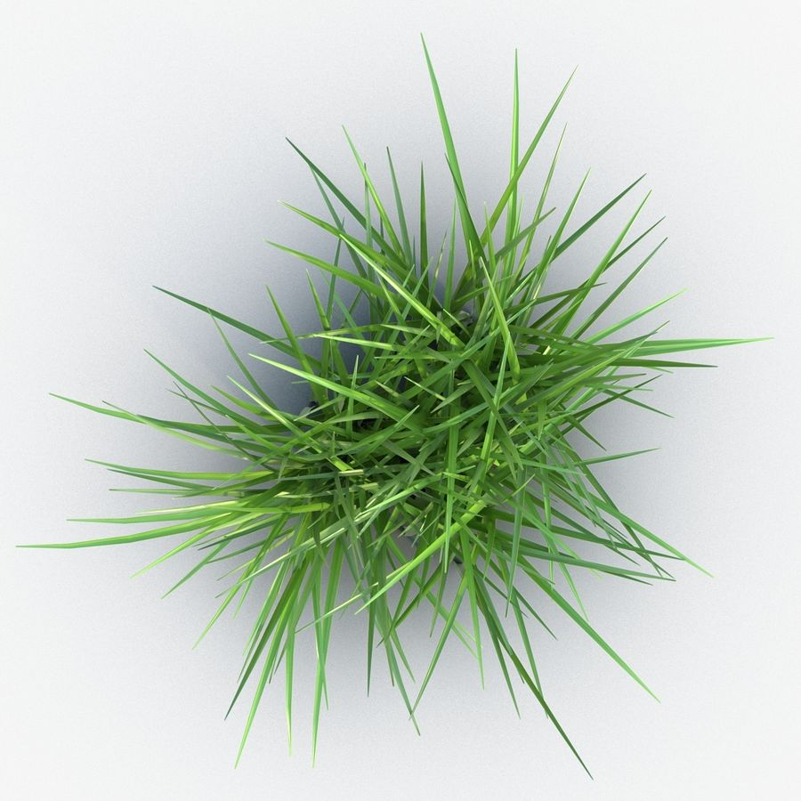 Grass royalty-free 3d model - Preview no. 7