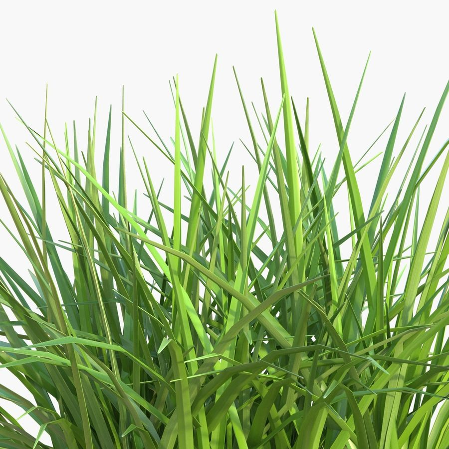 Grass royalty-free 3d model - Preview no. 11