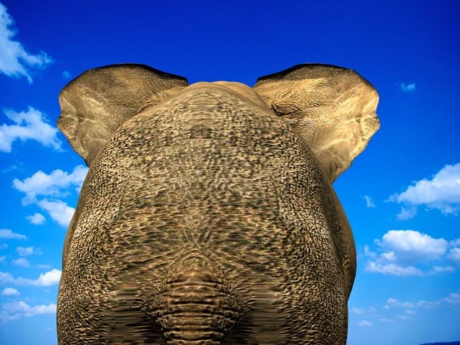 Elephant (african) royalty-free 3d model - Preview no. 5