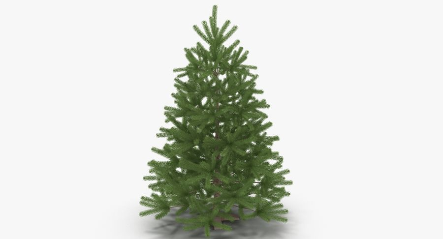 Fir Tree royalty-free 3d model - Preview no. 5