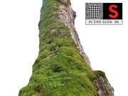 Old tree moss 8K 3d model