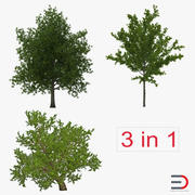 Summer Red Maple Trees Collection 3d model