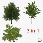 夏天红槭树集合 3d model