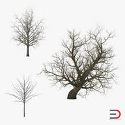 Winter Red Maple Trees 3D Models Collection 3d model