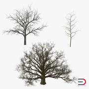 Collection d'arbres d'hiver White Oaks 3d model