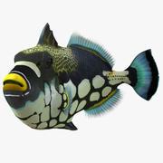 Clown Trigger Fish Pose 2 3d model