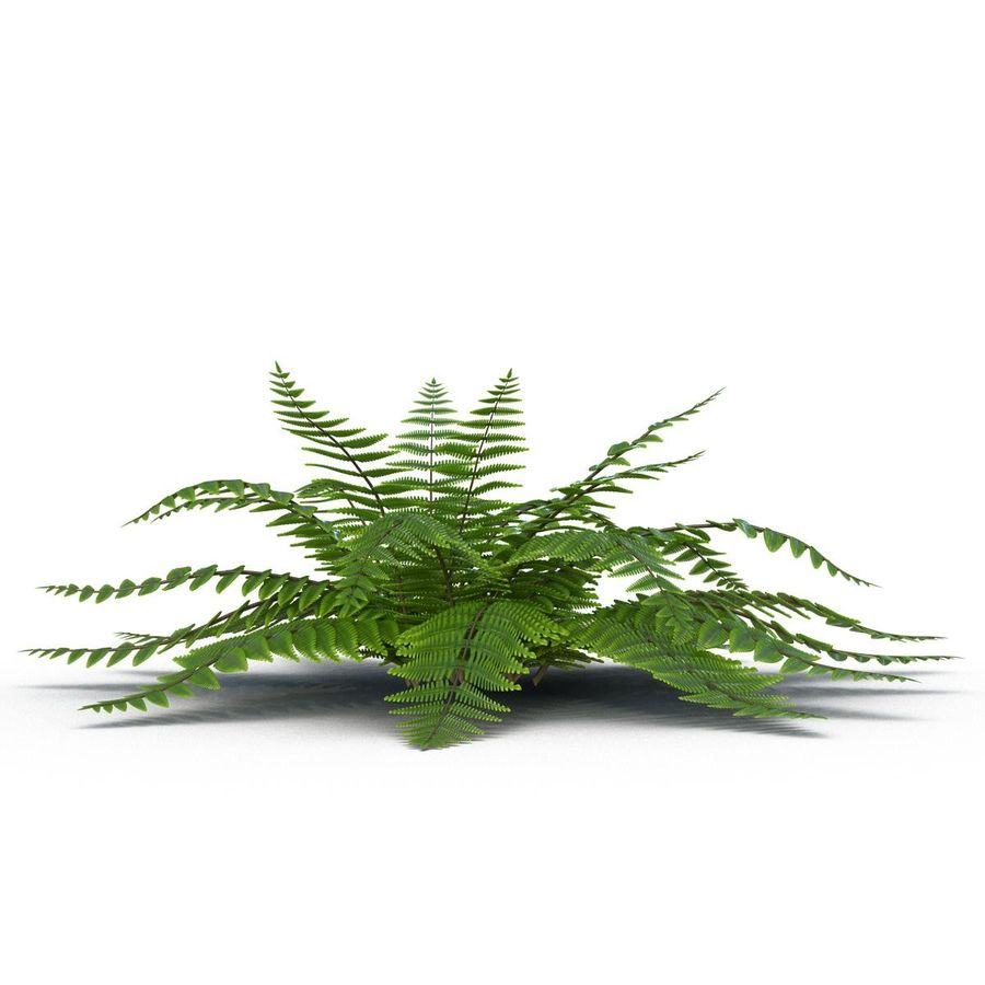 Fern royalty-free 3d model - Preview no. 4