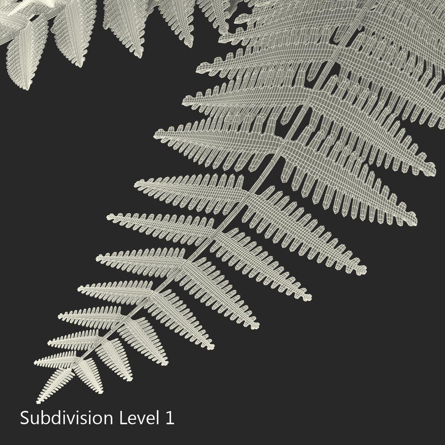Fern royalty-free 3d model - Preview no. 10