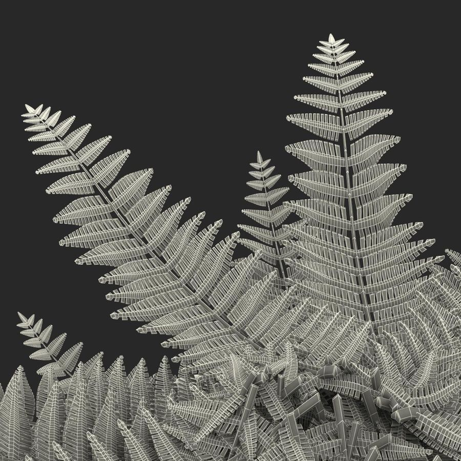 Fern royalty-free 3d model - Preview no. 17