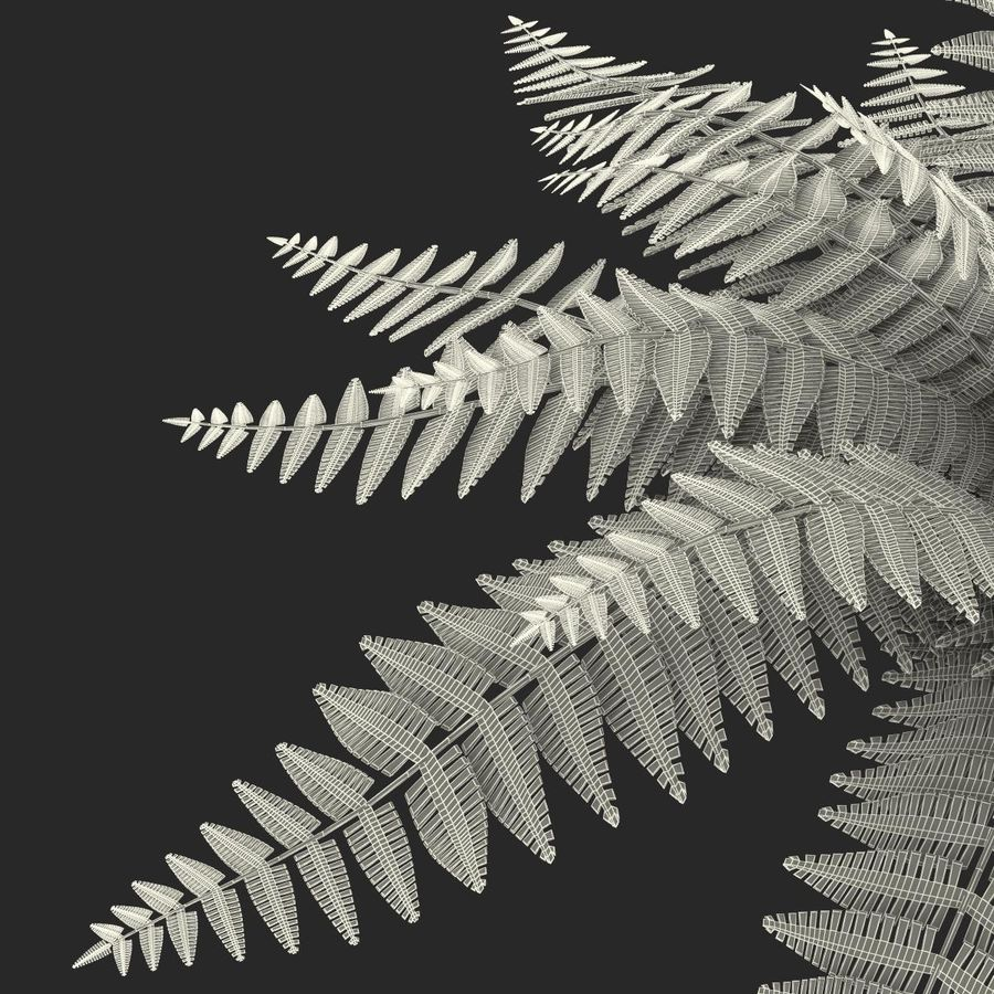 Fern royalty-free 3d model - Preview no. 19