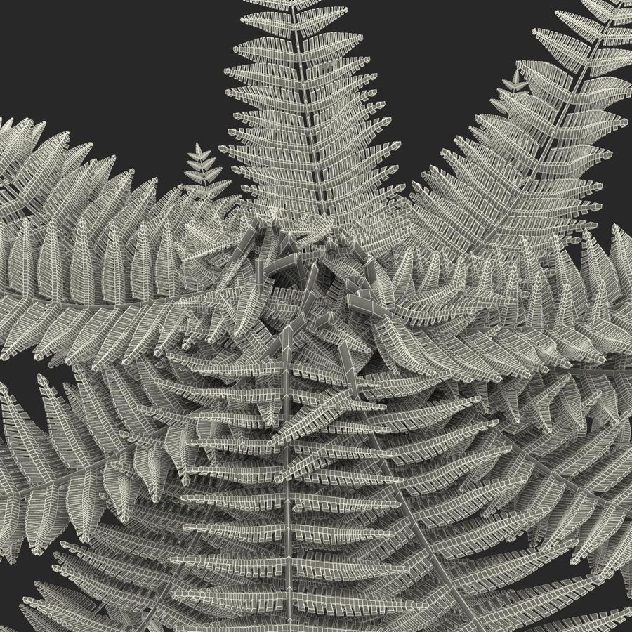 Fern royalty-free 3d model - Preview no. 16