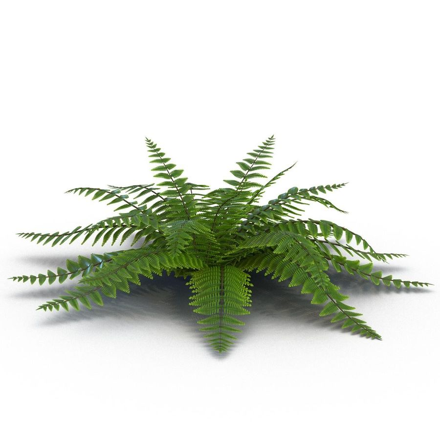 Fern royalty-free 3d model - Preview no. 3