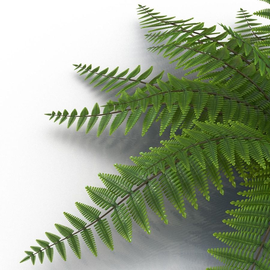 Fern royalty-free 3d model - Preview no. 7